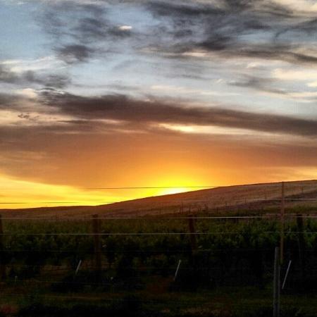 Walla Walla, WA: Vineyard Sunset