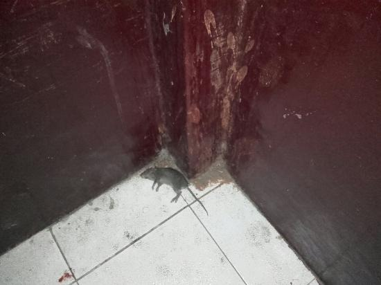 Garden Guest House: dead rat in the staircase