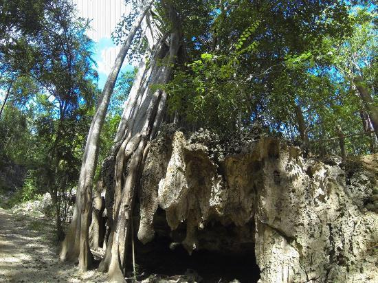 George Town, Gran Caimán: Crystal Cave Safari4