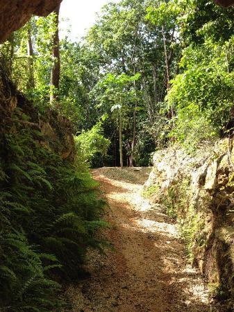 George Town, Gran Caimán: Crystal Cave Safari6