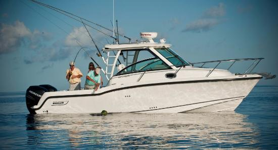 Tropical Suites Daytona Beach: Deep Sea sport fishing charters available for rental near the hotel