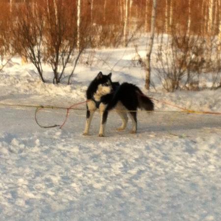 Huskies-Center Akvilon - Day Tours