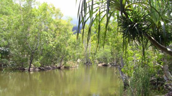棕櫚灣張圖片