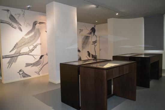 Lunel, France : Les Oiseaux de Buffon