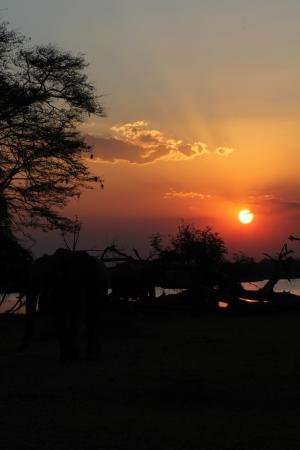 Bilde fra Liwonde National Park