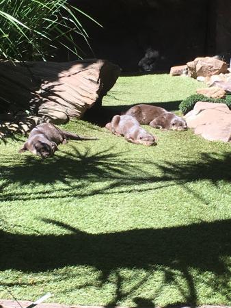 Buderim, Australia: photo2.jpg