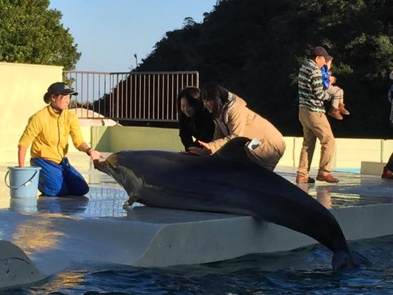 Taiji-cho, Japan: イルカもいて、とても安い料金で触れたり、餌をあげたりできます