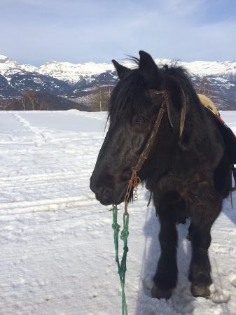 Nax, Schweiz: des poneys extras 27/01/16