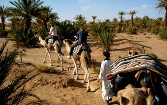Atlas Marrakech - Day Tours