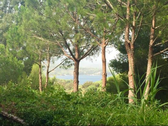 Camping Village Rosselba le Palme: photo0.jpg