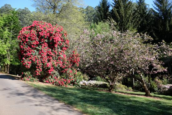 National Rhododendron Gardens Photo