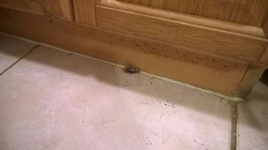 Riptide Hotel: Roaches!!