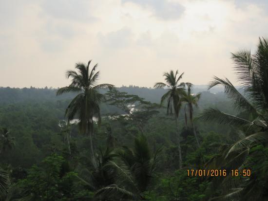 Angulugaha Photo