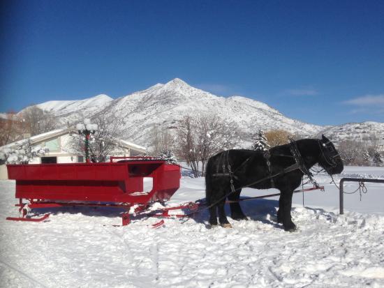 มิดเวย์, ยูทาห์: Blue skies, white snow, black horse