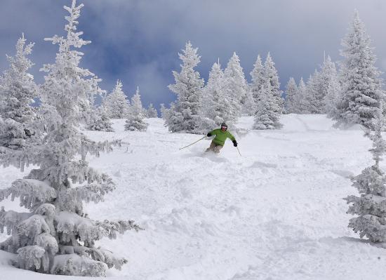Edwards, CO: Powder Skiing