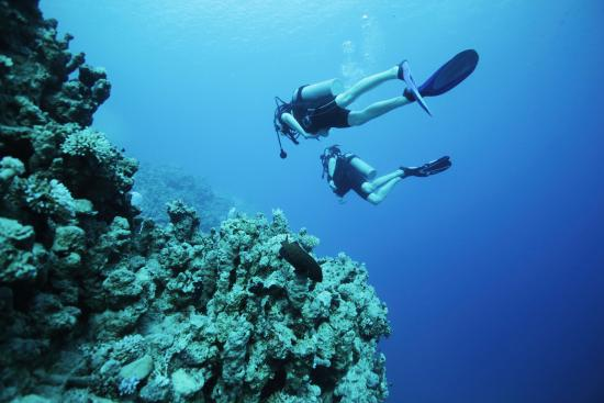 West End Village, Anguilla: Diving In The Island's Pristine Coral Reefs