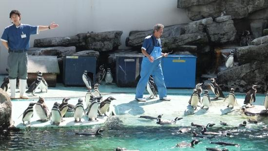 Joetsu Municipal Aquarium Resmi