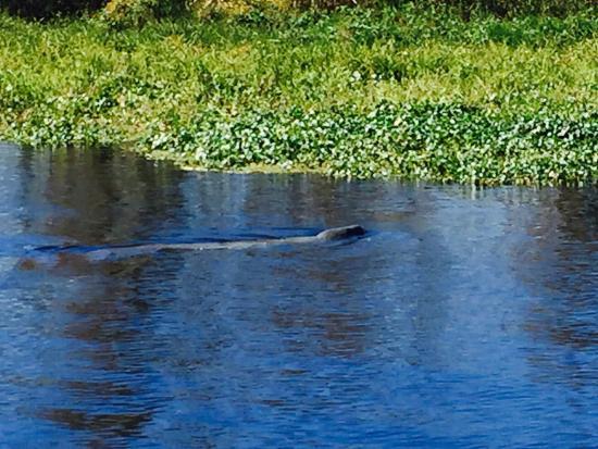 DeLand, FL: A beautiful trip on the St John River