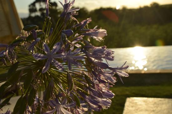Rosendal Winery & Wellness Retreat-bild