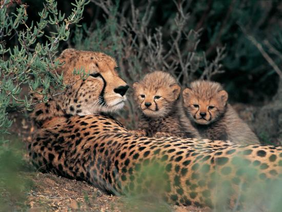Sanbona Wildlife Reserve - Tilney Manor, Dwyka Tented Lodge, Gondwana Lodge: Sanbona Animals