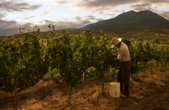 Dolores, CO: Vineyards