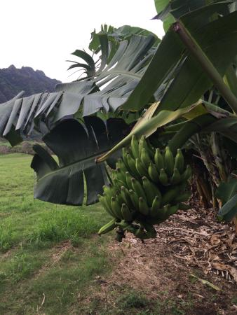 Kaneohe, Hawái: photo5.jpg