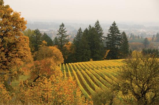 Ньюберг, Орегон: Valley