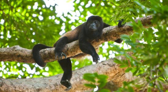 Aqua Wellness Resort: Wildlife