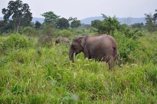 Hambantota, Sri Lanka : photo0.jpg