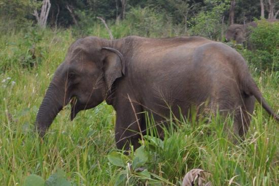 Hambantota, Sri Lanka : photo2.jpg