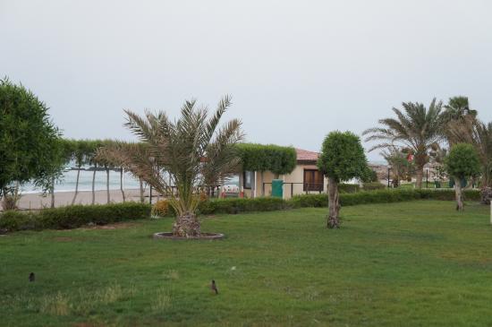 Dibba Al Fujairah-bild