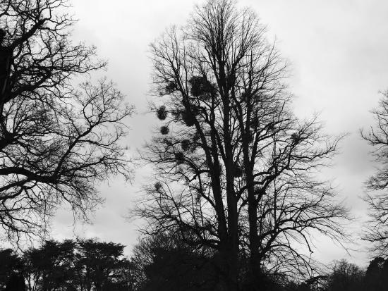 Sunninghill照片