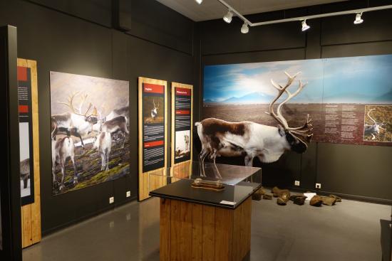 Egilsstadir, Island: Reindeer in East Iceland