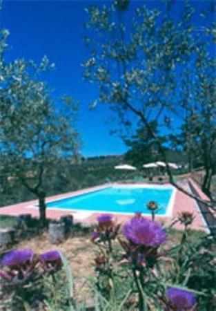 Барбедино-Валь-д'Эльза, Италия: La piscina