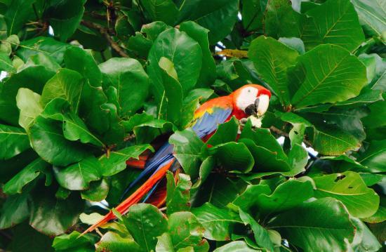 Osa Peninsula Εικόνα