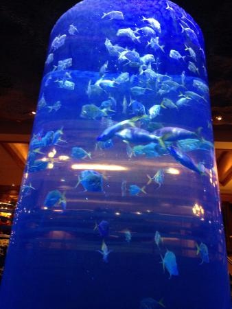 Downtown Aquarium Foto