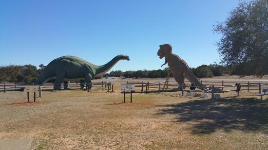 Dinosaur Valley State Park: 20160129_125051_large.jpg