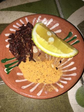 Apoala Mexican Cuisine Photo