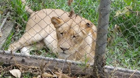 Lagunes Region, Ακτή Ελεφαντοστού: Zoo abidjan