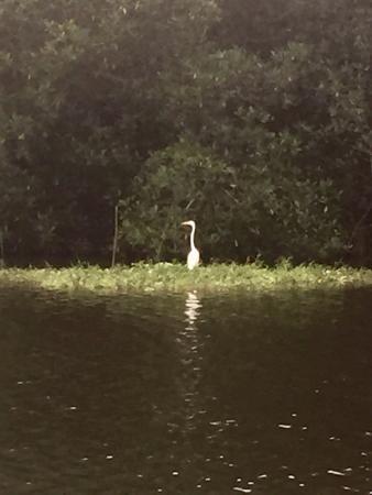 Laguna de Manialtepec: Hermoso paseo por la laguna de Mialtepec. Bien vale la pena.