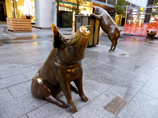 The Rundle Mall Pigs