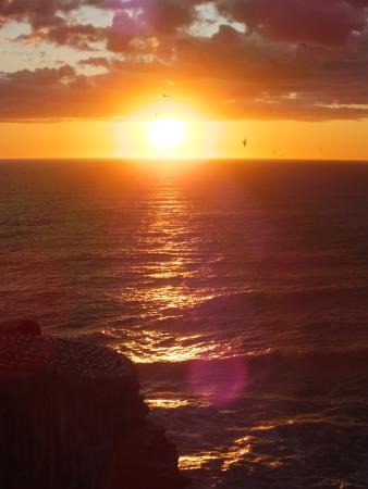 Muriwai Beach照片