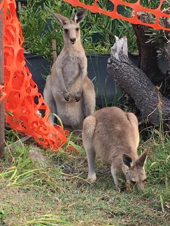Point Lookout, Australien: photo2.jpg