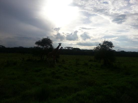 Foto de Lake Nakuru National Park