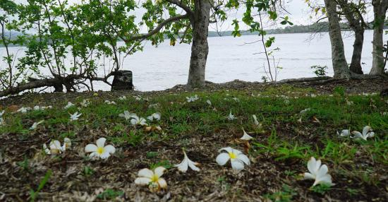 Malekula Island Φωτογραφία