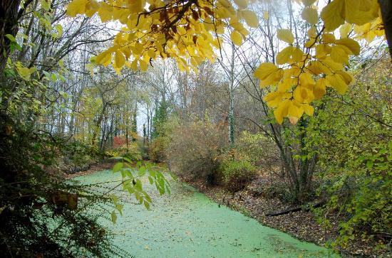 Chabanais, ฝรั่งเศส: une mare en automne