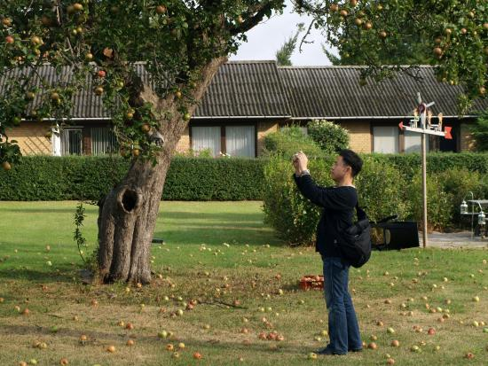 Noerreballe, Danmark: Eco apples in our garden are the interest of tourists from Japan