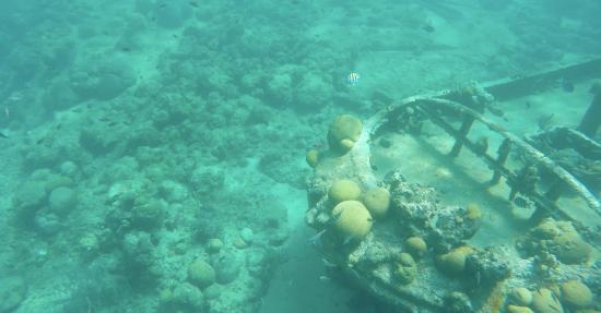 Zdjęcie Zatoka Simpson