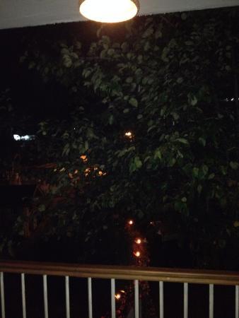 The Pear Tree Photo