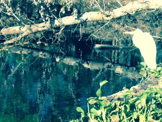 LaPlace, LA: Cajun Swamp Tour